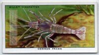 Common Prawn Shrimp Seafood Marine Ocean  c80 Y/O Ad Trade Card