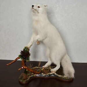 ARCTIC FOX TAXIDERMY MOUNT - WHITE FOX, SNOW FOX MOUNTED, STUFFED ANIMALS