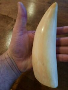 Whale tooth,made plastic 16.5cm