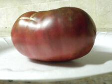 Cherokee Purple Heirloom Tomato--35 seeds--Good Yields, Sweet and Rich Flavor