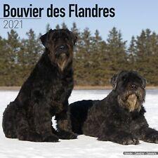 Bouvier des Flandres (Euro) Calendar 2021 Premium Dog Breed Calendars