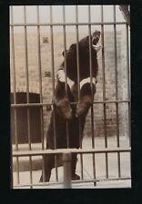South Africa Pretoria zoo Animals BEAR pre1919 RP PPC