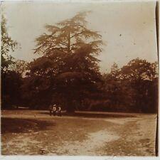 Bois de Verrières Ile de France Photo Plaque Stereo Vintage