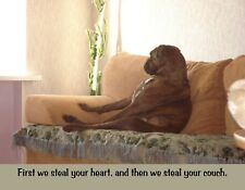 METAL FRIDGE MAGNET Dog Boxer First We Steal Heart Then Steal Couch Dog Humor