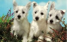 Vintage Picture Postcard West Highland White Terriers Westie puppy dogs heather