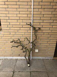 Korkenzieherhaselnuss Terrarium Vogelstange Tiere 113cm Basteln Unbehandelt  (2)