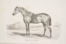 Cheval de la Plata, litho Journal des Haras 1876