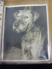 "Circa années 1920 Dog Show: Original Photo, 10""x 8"" - mondes Champion vétéran AI"