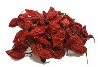10g Dried Chilli Chili Naga Bhut Jolokia - Ghost Pepper - CHILLIESontheWEB