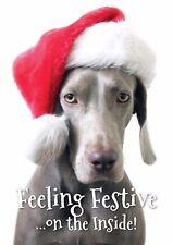 Feeling Festive - Weimaraner Dog Christmas Card & Envelope - A5 Size