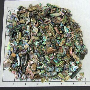 "ABALONE PAUA SHELL 1/2-1 1/2"" tumbled bulk 1/2 lb pinks blue iridescent narrow"