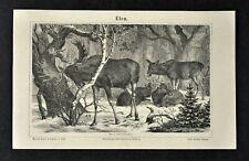 1875 Meyer Animal Print European Elk Alces Palmatus Male Female Deer Mammal