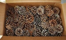 PINE CONES 30 NORWAY PINE CONES  1 - 2.25 INCHES TALL (GREAT CRAFTING ITEM)