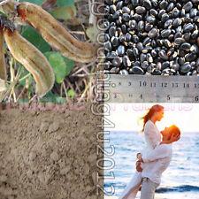60g. Dried L-DOPA Mucuna Pruriens Dopamine  black Velvet Bean Powder Sex Enhance