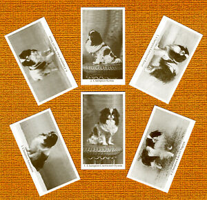 JAPANESE CHIN SET OF SIX NAMED DOG COLLECTABLE TRADE CARDS GREAT GIFT