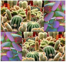 BIG PACK - (1,000) CACTUS MIX Seed - Parodia Melocactus Seeds - Cereus giganteus