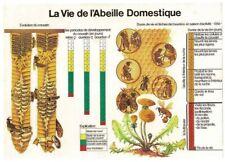 Affiche poster set de table  21x30 La Vie de l'abeille Domestique Évolution