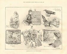 1887 antica stampa-Cage Bird Spettacolo al Crystal Palace