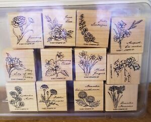 Stampin' Up! FLOWER OF THE MONTH Stamp Set of 12