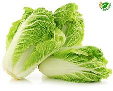 Col China Express ( 500 semillas ) seeds * Cabbage * chou * kohl