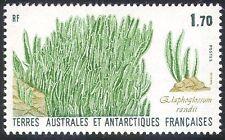 FSAT/TAAF 1988 Elephant Grass/Plants/Nature/Flora 1v (n22745)