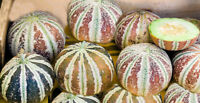 Very Rare Kajari Melon Heirloom Seeds Non GMO Long Shelf Life Good producer
