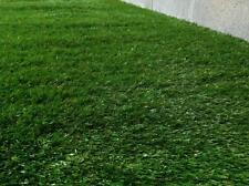 NEW Synthetic Artificial Grass Turf 20 sqm Roll - 35 mm