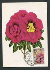 BELGIEN MK 1970 FLORA AZALEA BLUMEN MAXIMUMKARTE CARTE MAXIMUM CARD MC CM d1303