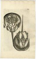 Antique Print-CANCER PERVERSUS-HORSESHOE CRAB-Rumphius-Maria Sybilla Merian-1741