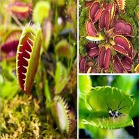 40 Pcs Venus Fly Trap Flower Seeds Dionaea Muscipula Giant Clip Garden Plants
