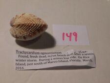 Trachycardium egmontianum Florida data45mm  #149