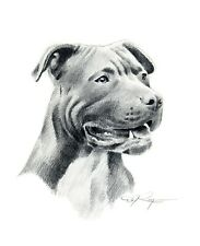Pit Bull Terrier Pencil Drawing 11 X 14 Large Art Print by Artist Dj Rogers