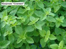 Herb Seeds Marjoram, Oregano, Savory. Organically Grown.