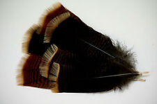 24 #1 ADULT RIO GRANDE WILD TURKEY PRE-TAILS CRAFTS/FEATHER PAINTING