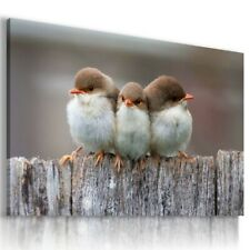 LOVELY BIRDS  Animals Canvas Wall Art Picture AN304 MATAGA . NO FRAME-ROLLED