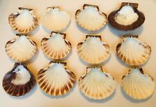"""Natural 5"""" Baking Shells For Coquilles St Jacques, S/12"""