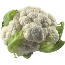 Cauliflower Erfurt Seeds Organically Grown Heirloom Vegetable NON GMO