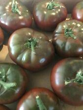 30 Graines Tomates Crimée Bio