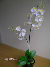 Artificial plants & flowers Phalaenopsis Orchid F40