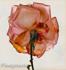 1980 Vintage 16x20 FLOWER Botanical Fine Art ROSE Photo Litho Plate IRVING PENN
