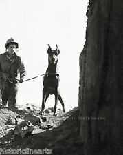 Marine Corp War Dog Photo Doberman Checking Cave for Enemy Iwo Jima WWII 20949