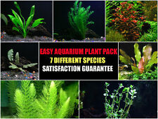 7 Species - Live Aquarium Plant  Package -  Anacharis, Amazon, Vals and more!