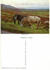 1980's WELSH COB PONIES UNUSED COLOUR POSTCARD