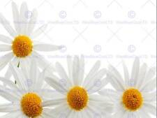 PHOTOGRAPHY COMPOSITION FLOWER DAISY GROUP CLOSE UP ART PRINT POSTER MP3383B
