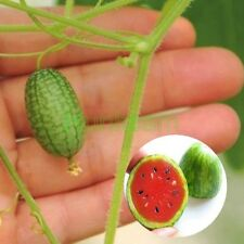 10pcs Seeds Cucamelon Mini Watermelon Red Miniature Fruit Home Yard Garden Plant