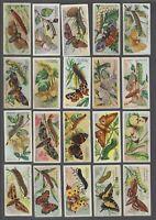 1904 John Player Butterflies & Moths Tobacco Cards Near Set of 46/50