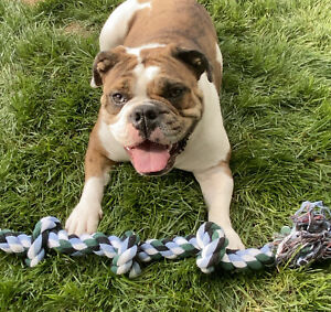 """Dog  Chew Toy 5 Knot Rope Tug  Toy X Large 36""""  Cottonblend Pet Play.  USA Ship"""
