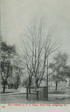 Allegheny PA * Pres. U.S. Grant Planted Tree in West Park ca. 1908