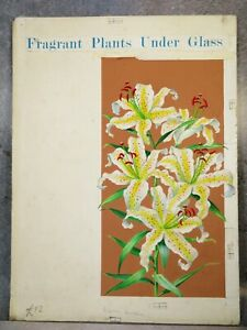 ORIGINAL PAINTED BOOK ILLUSTRATION of LILIES