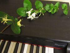 7+ cutting Lonicera Japonica Honeysuckle Vine Fragrant Flowers+instruction